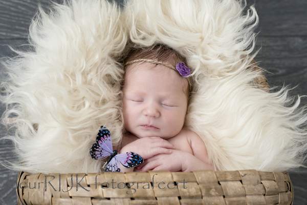 Newbornshoot baby Ivy